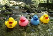 Rubber Duck Race
